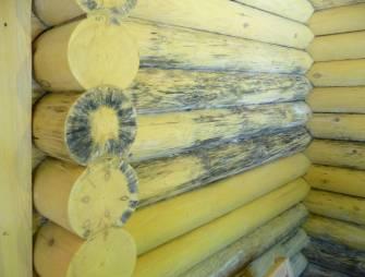 появление плесени на деревянной поверхности сруба